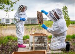英国古德伍德劳斯莱斯汽车之家首任少年养蜂人揭晓
